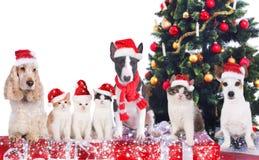 Grupp av katter och hundkapplöpning framme av ett julträd arkivfoton