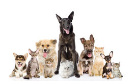 Grupp av katter och hundkapplöpning framme se kameran Isolerat på Arkivbild