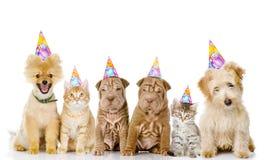 Grupp av katter och hundkapplöpning med födelsedaghattar Isolerat på vit Royaltyfria Foton