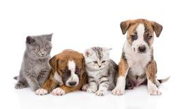 Grupp av katter och hundkapplöpning som framme sitter Isolerat på vit Arkivbilder