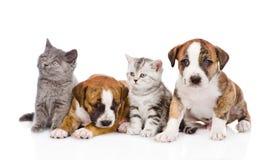Grupp av katter och hundkapplöpning som framme sitter På white Arkivfoto