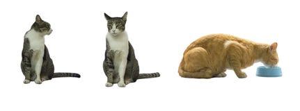 Grupp av katter som isoleras på vit bakgrund Arkivfoto