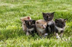 Grupp av kattungar Royaltyfri Foto