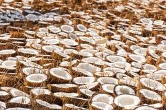 Grupp av kokosnöthalvor vikta på jordningen för att torka arkivfoton