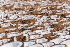 Grupp av kokosnöthalvor vikta på jordningen för att torka arkivfoto