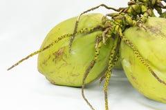 Grupp av kokosnötter Royaltyfri Bild