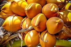 Grupp av kokosnötter Royaltyfri Foto