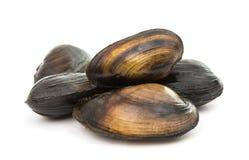 grupp av kokta musslor i isolerade skal Royaltyfria Foton
