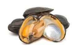grupp av kokta musslor i isolerade skal Royaltyfri Bild