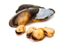 grupp av kokta musslor i isolerade skal Royaltyfri Foto
