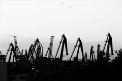 Grupp av kranar på arbete i en stor havsport, på gryningen av Blacket Sea fotografering för bildbyråer