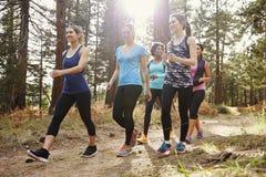 Grupp av kvinnalöpare som går i en skog, slut upp royaltyfri foto
