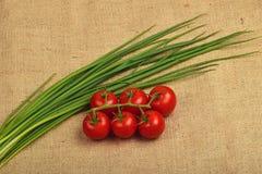 Grupp av lökskott för körsbärsröd tomat och vårpå kanfas Royaltyfri Foto