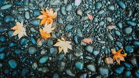 Grupp av lönnlövet som är stupad på vått golv från höstsäsong på PA Royaltyfri Fotografi