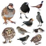 Grupp av lösa fåglar Royaltyfri Foto