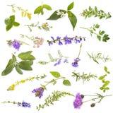 Grupp av lösa växter royaltyfria bilder