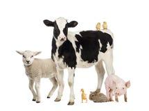 Grupp av lantgårddjur arkivbild