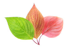 Grupp av leafs royaltyfri bild