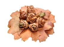 Grupp av leaves på en vit bakgrund Arkivfoto