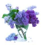 Grupp av lilan i den glass vasen Royaltyfri Bild