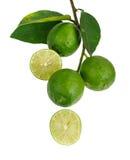 Grupp av limefrukter Arkivfoto