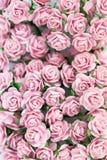 Grupp av ljusa magentafärgade rosor för bakgrund Royaltyfri Foto