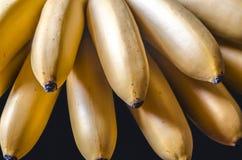 Grupp av ljusa små unpeeled mogna bananer Royaltyfri Bild