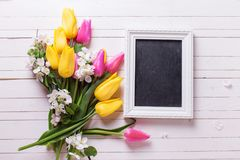 Grupp av ljusa vårtulpan och blommor för äppleträd, tom bla Arkivfoton