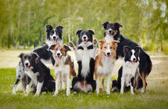 Grupp av lyckliga hundar Royaltyfri Fotografi