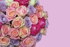 Grupp av mång--färgade rosor över rosa bakgrund Selektiv fokus med prövkopiatext Royaltyfri Fotografi