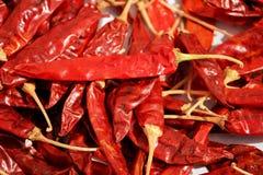 Grupp av många torkade röda kryddiga naturliga kyliga samlingar Royaltyfri Fotografi