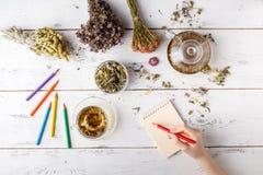 Grupp av medicinska örter, koppen av sunt te och påsen av torra sunda coneflowers på träbräde som behandling för perforatum för m royaltyfri foto