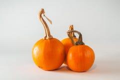 Grupp av Mini Pumpkins Arkivbilder