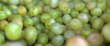 Grupp av mogna och saftiga gröna druvor Fotografering för Bildbyråer