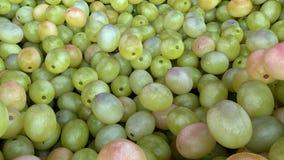Grupp av mogna och saftiga gröna druvor Arkivbilder