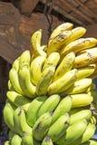 Grupp av mognade bananer Royaltyfri Fotografi