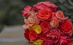 Grupp av multicolour Rose Flowers - royaltyfria foton