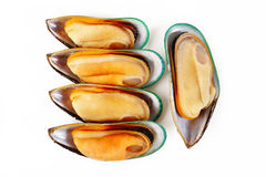 Grupp av musslor Arkivbild