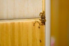 Grupp av myror i enhet Royaltyfria Foton