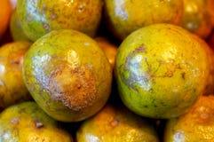 Grupp av ny apelsinbakgrund Royaltyfri Bild