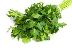Grupp av ny grön parsley Royaltyfria Bilder