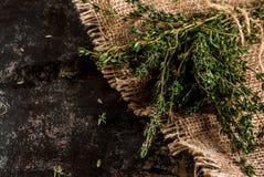 Grupp av ny organisk timjan arkivfoton