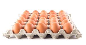 Grupp av nya ägg på vit arkivbild