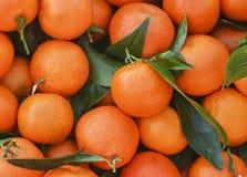 Grupp av nya apelsiner på en marknad Arkivfoto