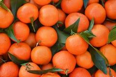 Grupp av nya apelsintangerin på en marknad Royaltyfria Foton