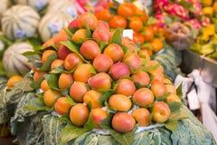 Grupp av nya aprikors som är till salu i en marknad royaltyfri bild