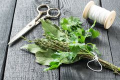 Grupp av nya aromatiska örter - bukettgarni Royaltyfri Bild