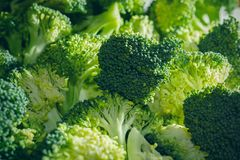 Grupp av nya broccoliflorets i morgonljuset fotografering för bildbyråer
