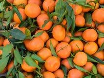 Grupp av nya clementines Arkivbilder