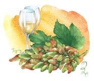 Grupp av nya druvor och exponeringsglas av vitt vin Royaltyfri Fotografi